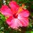 エリー 🇮🇹🐞💛 eri_poco のプロフィール画像