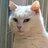 gatto_Picci