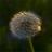 <a href='https://twitter.com/Tigrib68' target='_blank'>@Tigrib68</a>