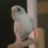 The profile image of soyokaze_love