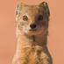 Seth Markman's Twitter Profile Picture