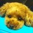 ともちぃさんのプロフィール画像