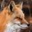 Fox Trail Taxidermy