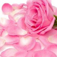 pinkroselady | Social Profile