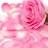 pinkroselady profile