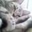 猫仙人スナフキーのアイコン