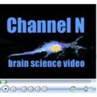 Channel N | Social Profile