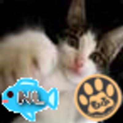 ポノちゃん(加速度70.0倍)冬モード | Social Profile