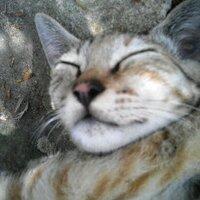 ゆかいなハゲおやじ | Social Profile
