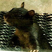 Rocky the Squirrel | Social Profile