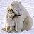 @polarbear_rx8