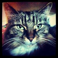 Gizmo | Social Profile