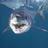 @SharkFishnJourn