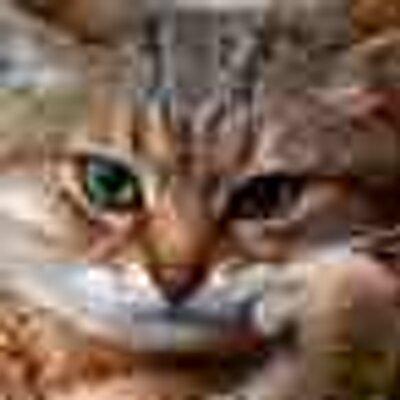 Perspicacious Ægis | Social Profile