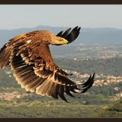 Aguila Imperial | Social Profile