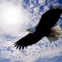 자유수호 Defend Freedom | Social Profile