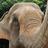 Save Elephant