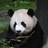 The profile image of pandahakase_bot