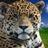 JaguarSage