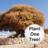 @Plant_1_Tree