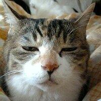 catzoo | Social Profile