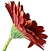 CG Photography | Social Profile