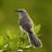 @Birdswatch