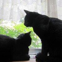 bcats_tail | Social Profile