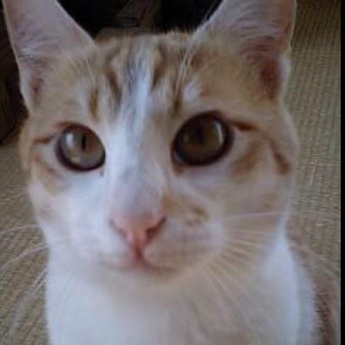 三毛猫の画像 p1_23