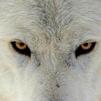 ニホン足オオカミ | Social Profile
