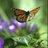 @FOButterflies