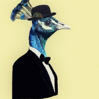 The Muddled Peacock | Social Profile