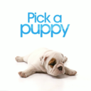 Pick A Puppy