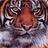 @Richmond_Tiger