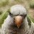 brooklynparrots