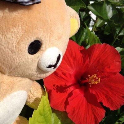 キャサリンやえこ   Social Profile