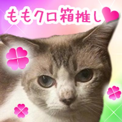 ゆえちゃんZ@桃神祭2日目 | Social Profile