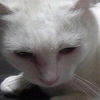 ミコ (来年・年女) | Social Profile