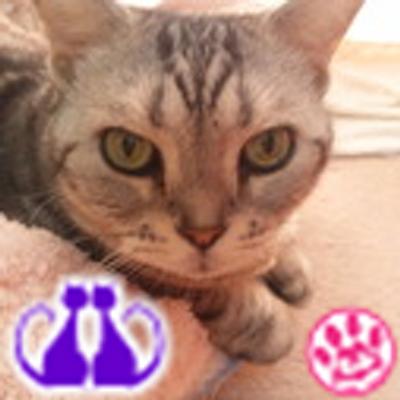 まみぃ | Social Profile
