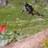 twitter avatar of Flo_Arthus