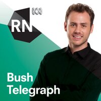RN Bush Telegraph | Social Profile