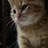 The profile image of bremen_ohshima