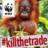 orangutanolle profile