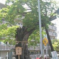 MukunokiYasuo | Social Profile