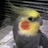 @sackom_bird