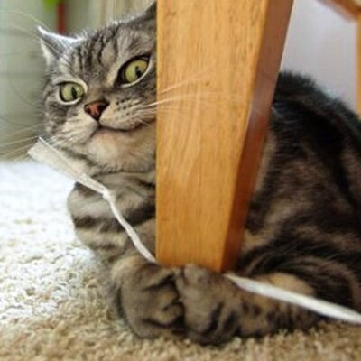加藤 大介 猫好きだけど、アレルギー | Social Profile