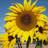 TucsonVillageFa profile