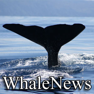 Whale News Social Profile