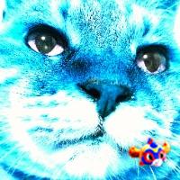626号_ver2.22 ♪(´ε` )   Social Profile