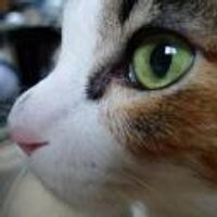 ふるふる(ふるや ともこ) | Social Profile